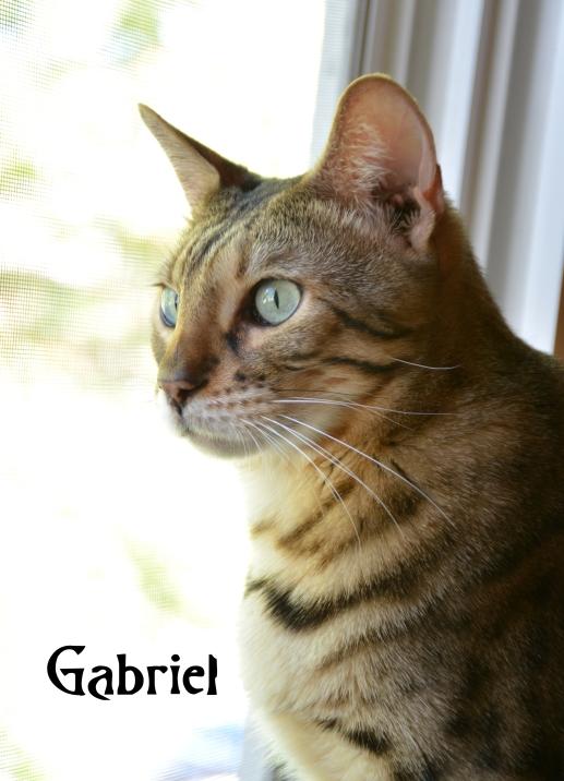 Gabriel 10