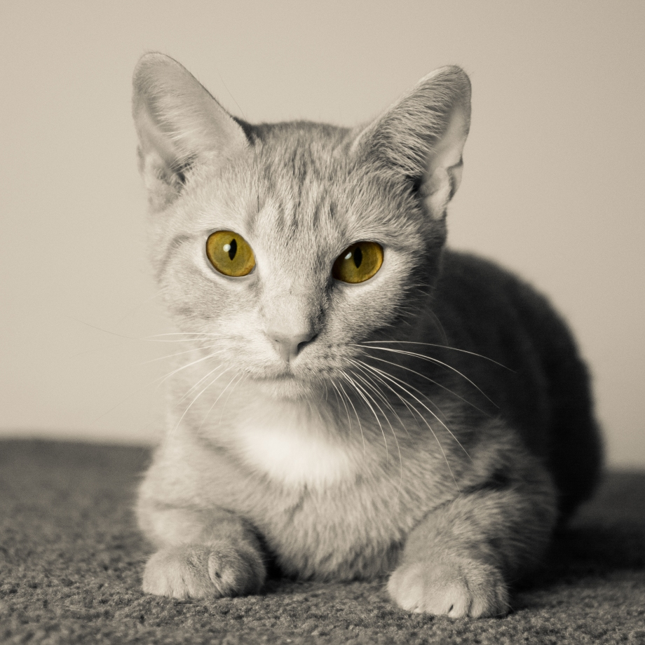 Peach B-W yellow eyes